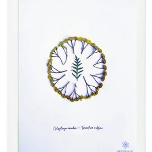 varádics-herbáriumkép1